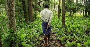 A forest grown by people in Assam holds new hope for rhino conservation