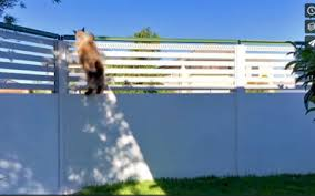 Cat Containment Systems Cat Proof Fence Rollers Catfence