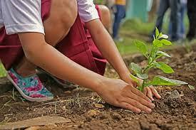 plantacion árbores