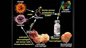 GcMAF Therapy: A Potential Anti-Cancer Protocol? - Health Real ...