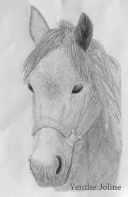 10 Beste Afbeeldingen Van Paarden Paarden Paard Tekeningen En