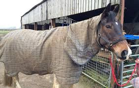 a versatile and robust turnout rug that