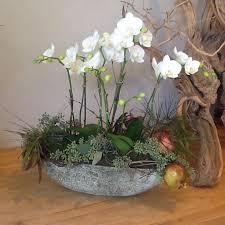 orchid in encinitas ca