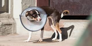 the best dog and cat cones reviews by