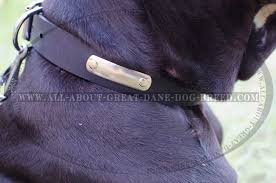 amazing leather collar with id tag for