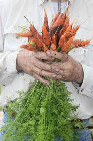 fall into winter vegetables on central