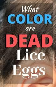 dead vs live nits color of lice eggs