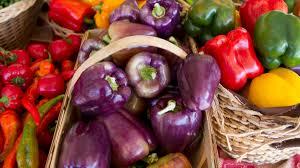 vendor list dining services