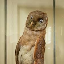 صور طريفة حيوانات تم تحنيطها بطريقة مضحكة رو