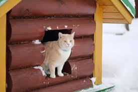 heated cat house why it s necessary