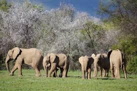 elephant-herd-samara-private-game-reserve-ida-hansen - You2Africa