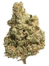 Jack the Ripper - Cannabis Strain ...