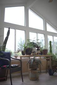 5 indoor plants that look great in a