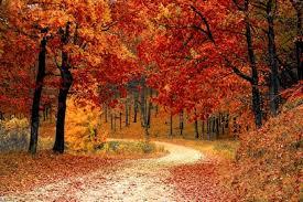 Top 7 Autumn Activities for Seniors