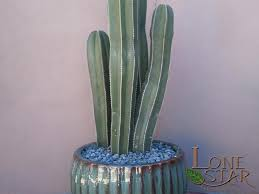 Landscape Accents And Details Photo Gallery Cactus Cactus And Succulents Paver Patterns