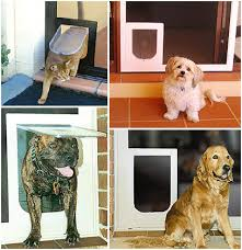 brisbane pet door gold coast dog door