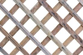 Trellis Definition And Meaning Collins English Dictionary