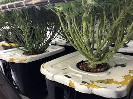 undercur hydroponics system