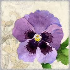 Pansy Paintings | Fine Art America