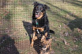 Best Fence For Dogs Deerbusters Com