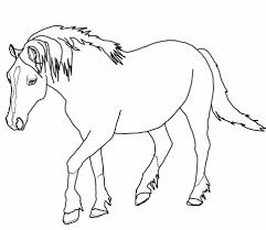 Palomino Welsh Paard Kleurplaat Gratis Kleurplaten Printen