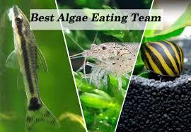 types of algae best algae eating team