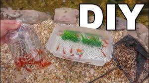 homemade goldfish bait tank feeding