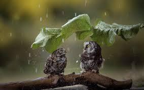 تحميل خلفيات البومة المطر الحياة البرية الطيور مضحك الطيور