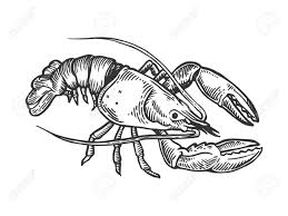 Lobster Sea Animal Engraving Vector ...