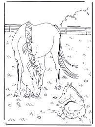 Paard En Veulen Kleurplaten Paarden