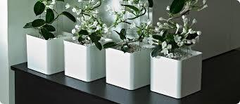 designer garden plant pots and home