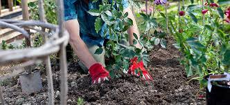 clay soil flower power