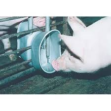 hog watering systems pig water cups