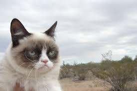 grumpy cat computer wallpapers desktop