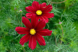 red flower background high quality