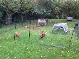 Poultry Netting Kits Explained The Best Poultry Electric Netting Kits