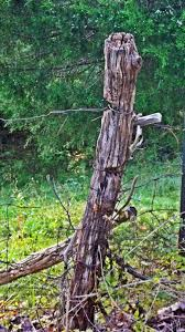 An Old Fence Post Photo By Joy Fussell Old Fences Country Fences Fence Post