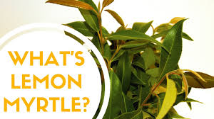 What Is Lemon Myrtle? - YouTube