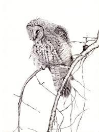 Gratis Afbeeldingen Tak Vogel Vleugel Zwart En Wit Pen Dier