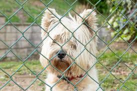 Fido Go Home Fenced Dog Parks Close In Alexandria The Zebra