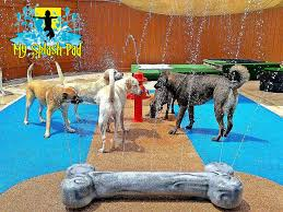 dog water park features for your splash