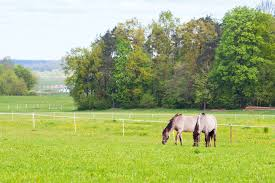 The Ins And Outs Of Temporary Horse Fencing The Horse