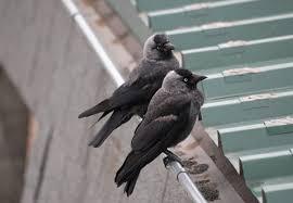 top 5 best bird deters updated