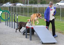 Companion Animal Committee Member Voices Concerns Over Lake Macquarie S Dog Park At Speers Point Newcastle Herald Newcastle Nsw
