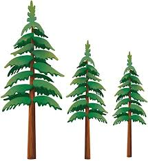 Amazon Com My Wonderful Walls Pine Tree Wall Decals Set Of 3 Home Kitchen
