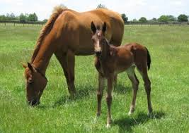 Windsor Park Stud | Horse Breeding | Horse Racing | Cambridge, New
