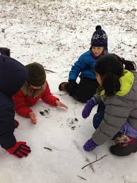 Finding Tracks in the Snow! — Birches School