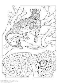 Kleurplaat Luipaard Kleurplaten Dieren Kleurplaten Gratis