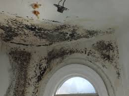 leaks behind walls create large mold