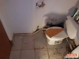 bathroom mold removal services iicrc